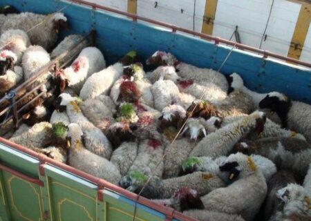 چگونه می توان بازار گوشت قرمز را کنترل کرد؟