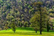 کاشتن بهترین ایدهها در جنگلهای هیرکانی