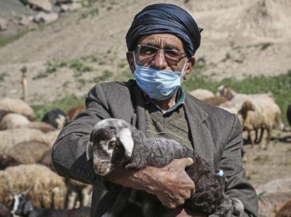 تامین علوفه مورد نیاز دامداران در جنوب کرمان