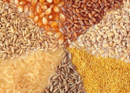 انحصار دولتی در واردات نهادههای دامی/ بخش خصوصی در حال حذف است