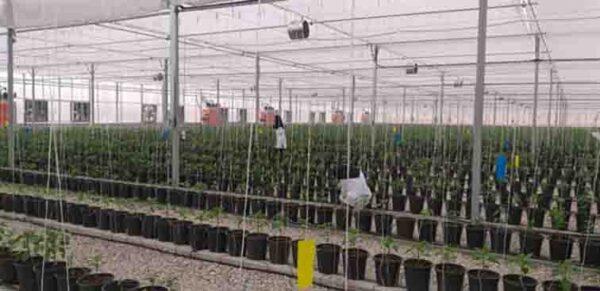 حمایت ۲۱۰میلیاردی بانک کشاورزی از مجتمع گلخانه ای هیدرو پونیک پرورش صیفی جات در استان ایلام